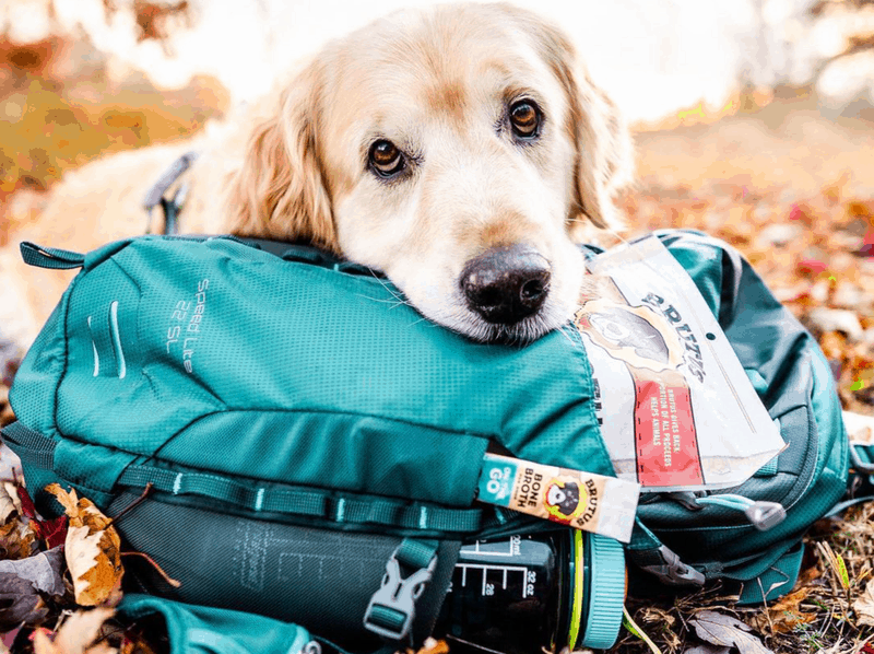 Golden Retriever with backpack of Brutus Treats
